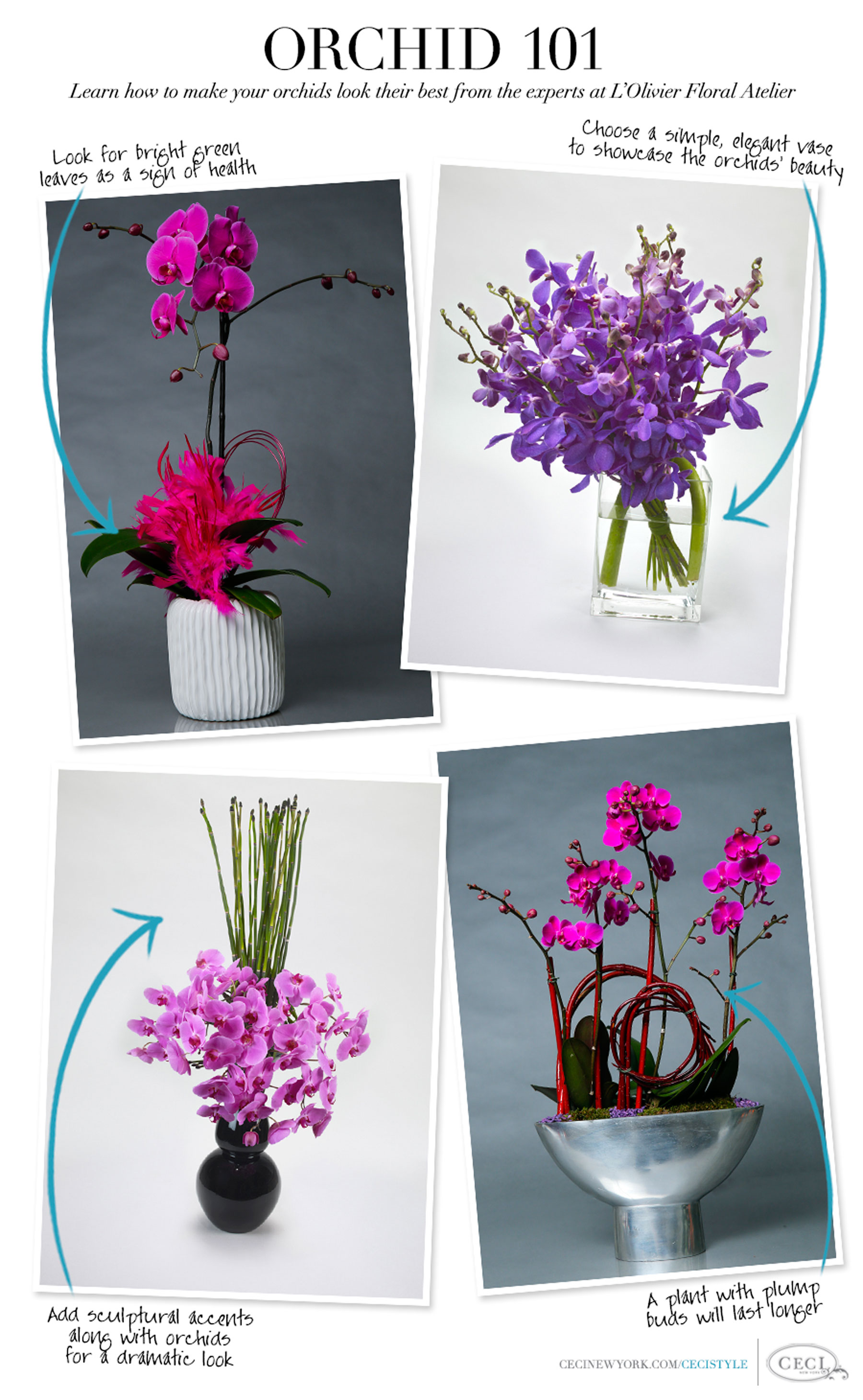 Orchid 101 - Learn how to make your orchids look their best from the experts at L'Olivier Floral Atelier